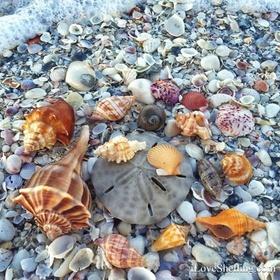 Go on a SEASHEEL BEACH - Bucket List Ideas