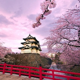 See the cherry blossom trees in japan - Bucket List Ideas