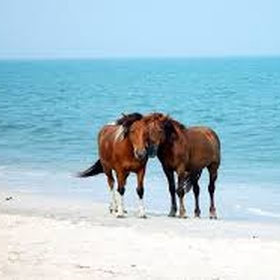 See the wild ponies at Assateague island - Bucket List Ideas