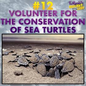 Volunteer For The Conservation Of Sea Turtles - Bucket List Ideas