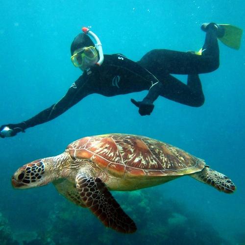 Snorkel in the Great Barrier Reef - Bucket List Ideas