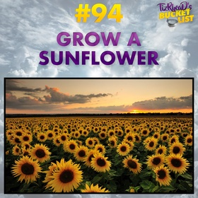 Grow a Sunflower - Bucket List Ideas
