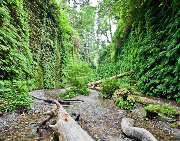 Take my kids hiking in Fern Canyon in the Redwoods national park - Bucket List Ideas