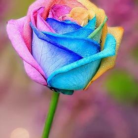 Make a rainbow rose - Bucket List Ideas
