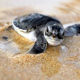 Release baby sea turtles - Bucket List Ideas