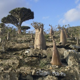 Visit Socotra, Yemen - Bucket List Ideas