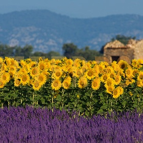France - Provence - Bucket List Ideas