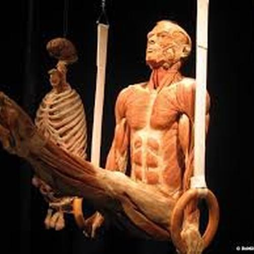 See the 'Body works' exhibit - Bucket List Ideas