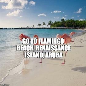 Go to Flamingo Beach, Renaissance Island, Aruba - Bucket List Ideas