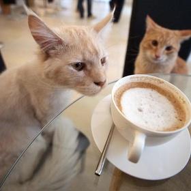 Visit a Cat Cafe - Bucket List Ideas