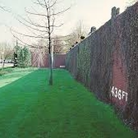 Visit the Forbes field wall of the old Pirates stadium - Bucket List Ideas