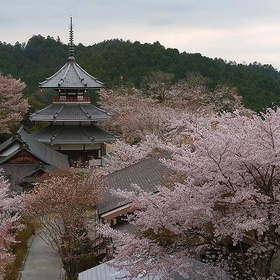 Japan – visit Mount Yoshino - Bucket List Ideas