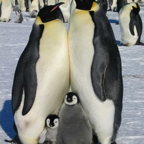 Meet penguins in Antartica - Bucket List Ideas