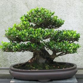 Grow a bonsai tree - Bucket List Ideas