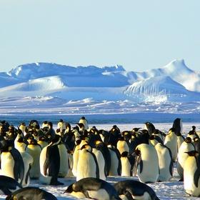 See emperor penguins - Bucket List Ideas