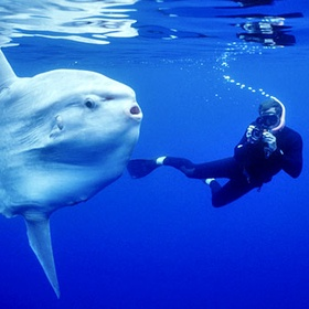 Dive In crystal bay bali and spot the sunfish - Bucket List Ideas