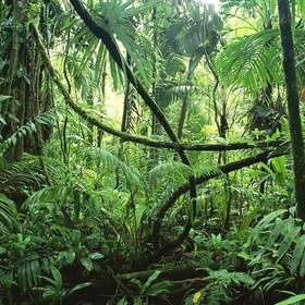 Visit the amazon rainforest and river - Bucket List Ideas