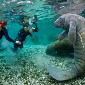 Swim/ snorkel with manatees - Bucket List Ideas
