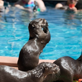 Swim with otters at The Nurtured by Nature Valley Centre, CA - Bucket List Ideas