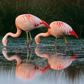 Ride the Flamingo Route - Bucket List Ideas