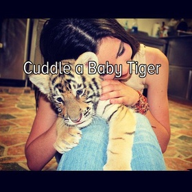 Hold a Baby Tiger!! - Bucket List Ideas