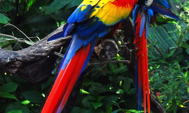Visit the Amazon Rainforest - Bucket List Ideas