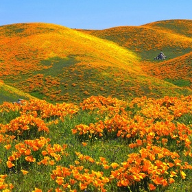 Visit Antelope Valley Poppy Reserve - Bucket List Ideas