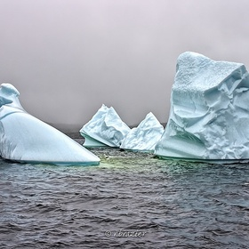 Visit Iceberg Alley - Bucket List Ideas