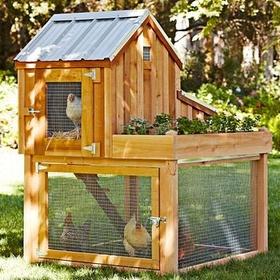 Build chicken coop and raise chickens - Bucket List Ideas