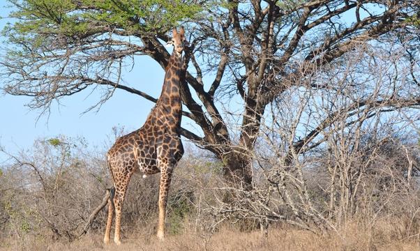 Go on a Safari - Bucket List Ideas
