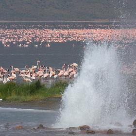 Visit Lake Bogoria, Kenya - Bucket List Ideas