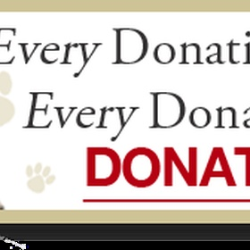 Donate money to help animals - Bucket List Ideas