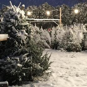Have a REAL Christmas tree - Bucket List Ideas