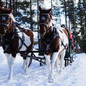 Go on a Reindeer Sleigh Ride - Bucket List Ideas