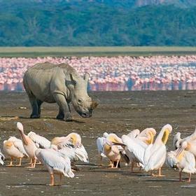 Visit Lake Nakuru National Park, Kenya - Bucket List Ideas