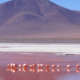 Visit Laguna Colorada (Red Lagoon) - Bucket List Ideas