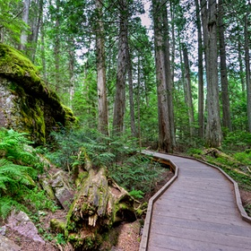 Walk the Trail of the Cedars in Glacier National Park, Montana - Bucket List Ideas