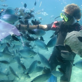 Scuba diving in Tonga - Bucket List Ideas