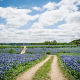 Drive on Bluebonnet Trail, Texas - Bucket List Ideas