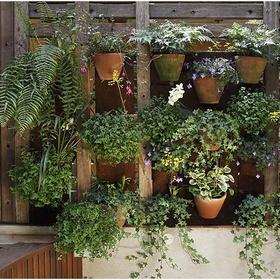 Trồng 1 vườn cây nhỏ - Bucket List Ideas