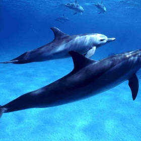 Swim with Dolphins in the wild - Bucket List Ideas