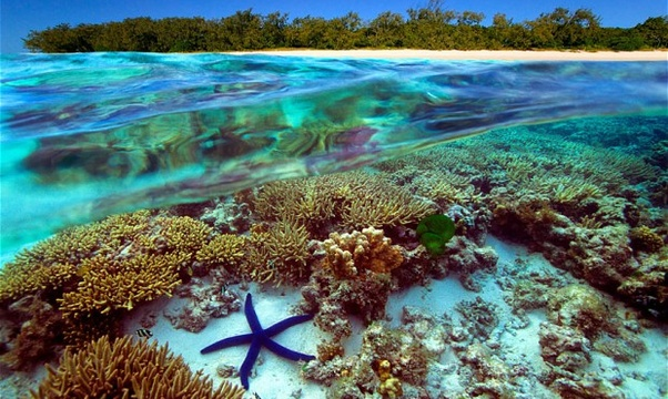 Swim the great barrier reef - Bucket List Ideas
