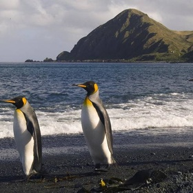 Visit Macquarie Island - Bucket List Ideas