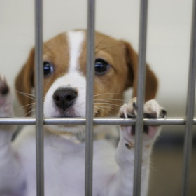 Rescue a dog/cat from an animal shelter - Bucket List Ideas