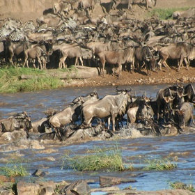 See the Great Migration - Bucket List Ideas