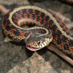 Own a pet snake - Bucket List Ideas