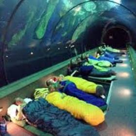 Sleep in an aquarium - Bucket List Ideas