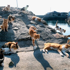 Visit Cat Island in Japan - Bucket List Ideas