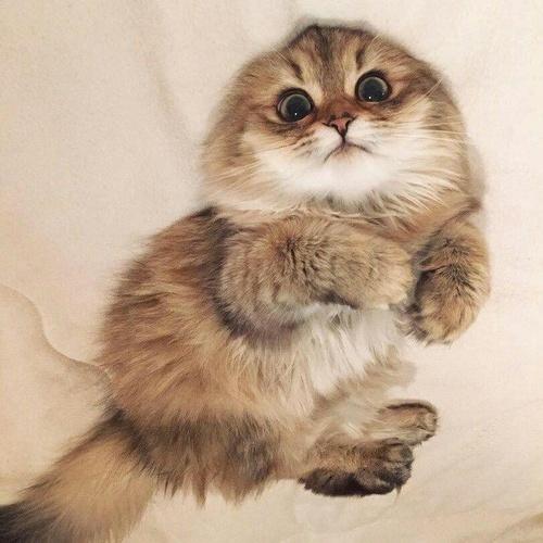 Having a kitten and grew it - Bucket List Ideas