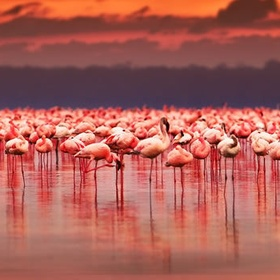See all the flamingos gather together at Lake Nakuru, Kenya - Bucket List Ideas